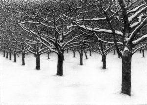 Snow Orchard