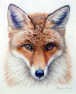 A Foxy Stare