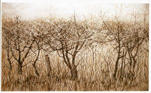 Hedgerow and Trees beyond