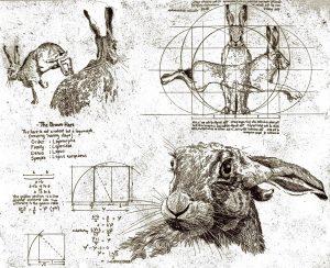 The Vitruvian Hare
