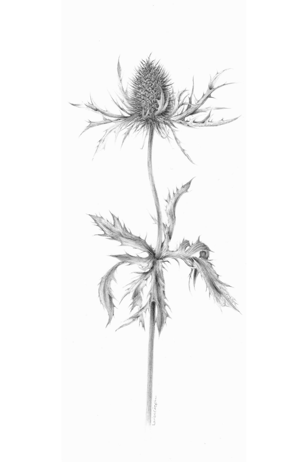 "Image of the Month: ""Decay IX Eryngium"" by Louisa Crispin ASGFA"