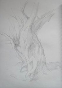 "Clive Riggs SGFA ""Sketchbook Tree"" Pencil on Paper."