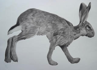 'Trotting Hare' by Clive Riggs SGFA