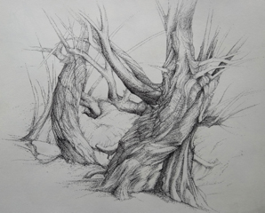 """Clive Riggs SGFA """"Sketchbook Tree"""" Dot Pen on Paper."""