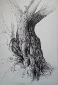 """Clive Riggs SGFA """"Sketchbook Tree"""" Pen and Ink on Paper."""