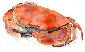Crab, print, Lucy Clayton
