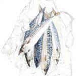 Mackerel, print, Lucy Clayton