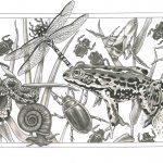 bugs optimised Tamlyn Blasdale-Holmes