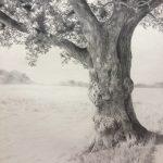 Old Oak Tree - Kaye Hodges