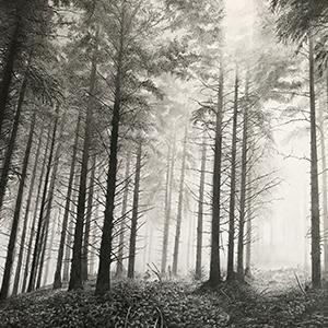 Paul Newman, Silver Mist