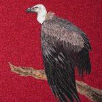 VultureAngela Knapp