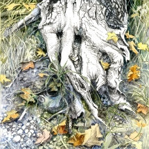 Marie Blake: Roots, Pen and Watercolour 21cm x 21cm £350