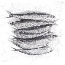 Sardines (6).tif