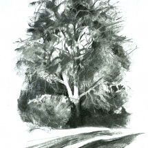 Hardy_Sue_Roble Beech_Charcoal