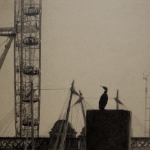 Judge_Anna_London Cormorant