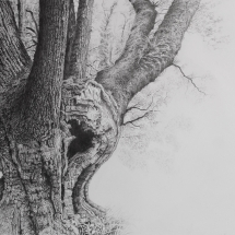 Paul Newman: Cloutsham Ball Oak
