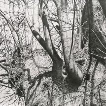 Paul Newman: Under the Oath Tree