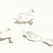 White-Alice-Trio of Swans-Ink and Coloured Pencil on Canson Paper