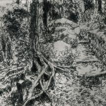 Cole Austin RBA SGFA Kamakurra Trail