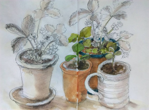 Karen Neale 'Sketching What is On Your Table'
