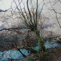Stanley Stuart SGFA Winter Trees by Water