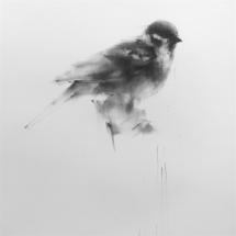 Wang Tianyin The Sparrow