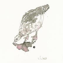 White Alice SGFA Puddle Duck