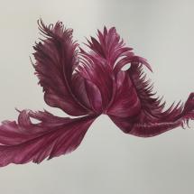 Williams Clare SGFA Parrot Tulipe