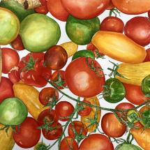 Williams Clare SGFA Rainbow Tomatoes